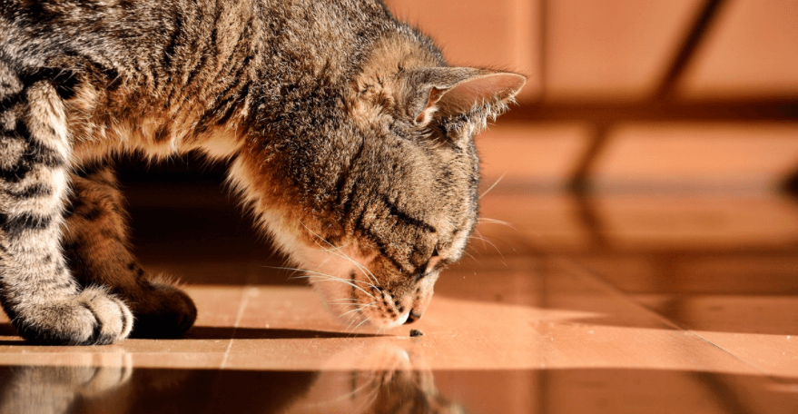 mon chat fait pipi partout