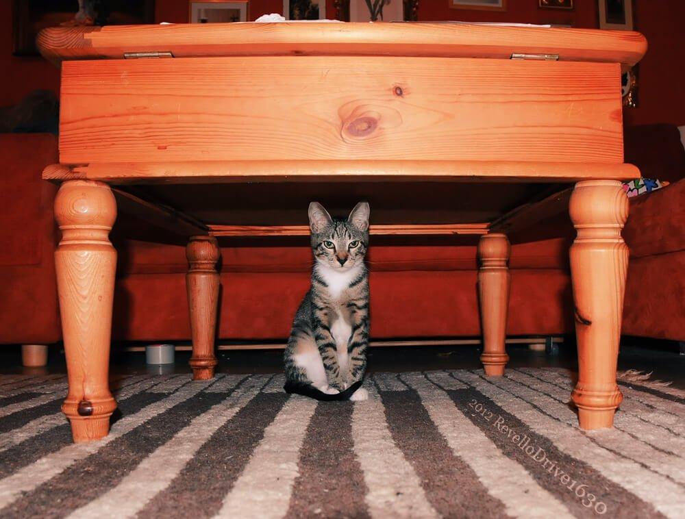 mon chat fait caca partout