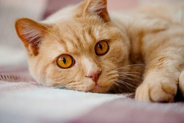 10 Signes de cancer de chat que tout propriétaire devrait connaître