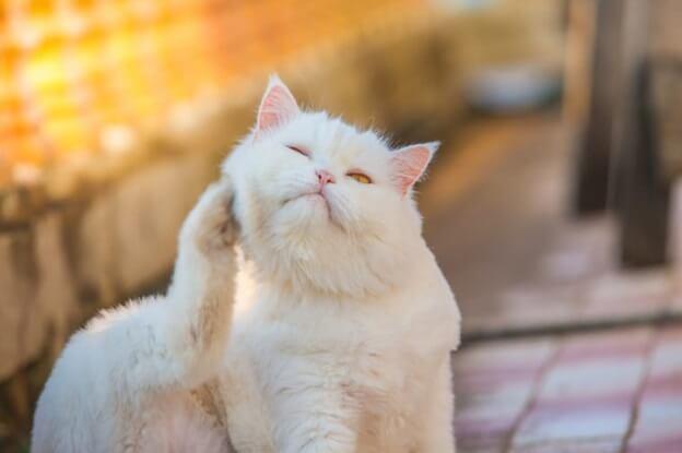 Symptôme de cancer de chat