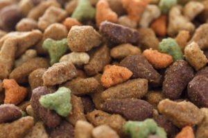 Mon chat peut-il manger de la nourriture pour chien?