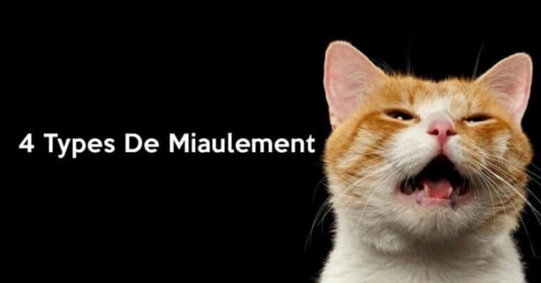 Sauvage chatte baise