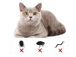 Le chat supprime les boules de poils…et se débarrasse de toutes les poussières, de toutes les parasites qui s'incruste dans ses poils