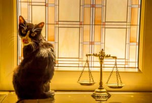 Chat abandonné: Ce que dit la loi