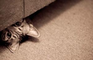 Les méthodes auxiliaires pour retrouver votre chat plus rapidement