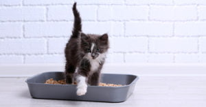 Faire ses besoins - chat -