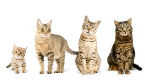 Procédure après avoir adopté un chaton abandonné
