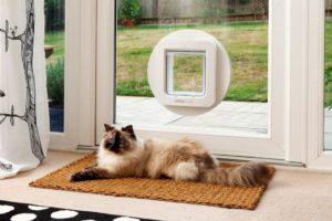 La technologie au secours des propriétaires de chats