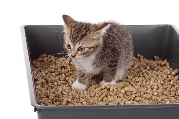 Quand vous allez savoir que la litière aggloméranteest la bonne pour votre chat ?